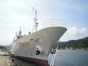 Kaihosibaura